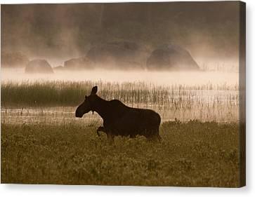 Foggy Stroll Canvas Print