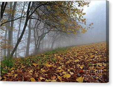 Canvas Print featuring the photograph Fogy Forest In The Morning 2 by Bruno Santoro