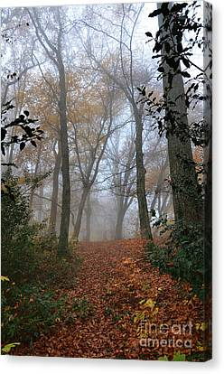 Fogy Forest In The Morning 3 Canvas Print