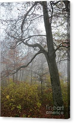 Canvas Print featuring the photograph Fogy Forest In The Morning 4 by Bruno Santoro