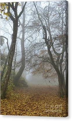 Fogy Forest In The Morning Canvas Print