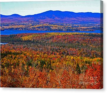 Foliage From Height Of Land Canvas Print