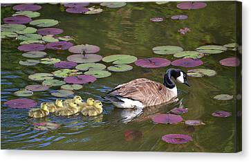 Canvas Print featuring the photograph Follow The Goose by Mary Zeman