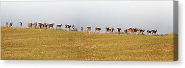 Follow The Herd Canvas Print by Bill Cannon