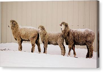 Follow The Leader Canvas Print by Linda Mishler