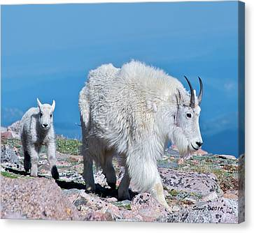Following Momma Canvas Print by Stephen  Johnson