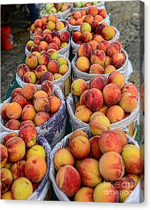 Food - Harvested Peaches Canvas Print by Paul Ward