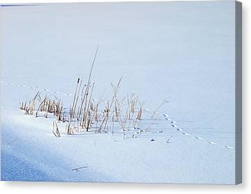Footprints On Snow Canvas Print by Paul Ge