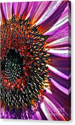 For Ana Canvas Print by Gwyn Newcombe