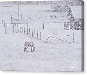 Sean Horse Canvas Print - Foraging In The Snow by Sean Griffin