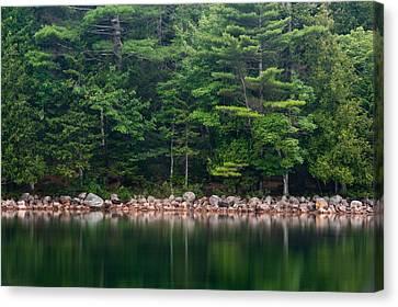 Forest At Jordan Pond Acadia Canvas Print by Steve Gadomski