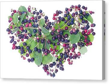 Forest Berries Heart Canvas Print by Aleksandr Volkov