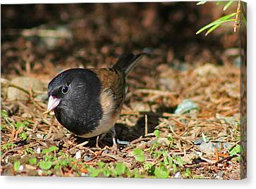 Canvas Print featuring the photograph Forest Bird by Tyra  OBryant