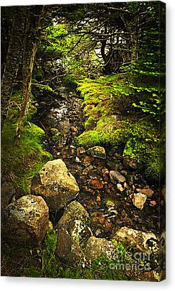 Forest Creek Canvas Print by Elena Elisseeva