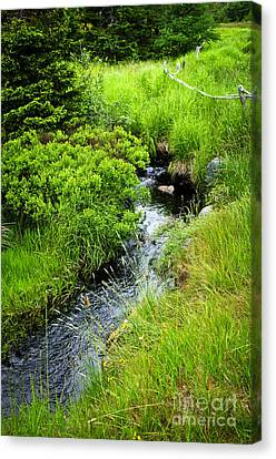 Forest Creek In Newfoundland Canvas Print by Elena Elisseeva