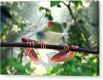 Forest Frog Canvas Print by Ilendra Vyas