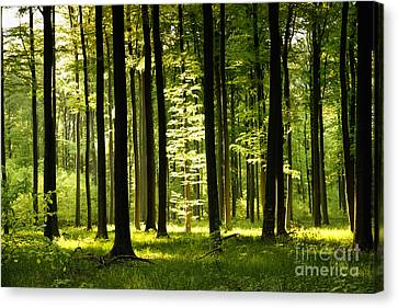 Forest Idyll Canvas Print by Renate Knapp