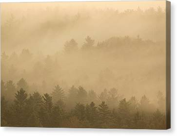 Forest In The Fog Canvas Print by John Burk