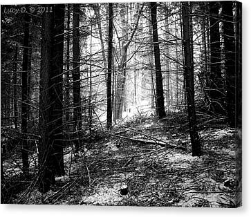 Canvas Print featuring the photograph Forest by Lucy D
