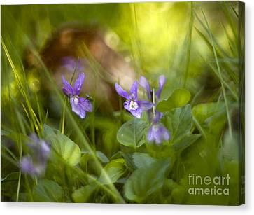 Forest Meadow Canvas Print by Angel  Tarantella