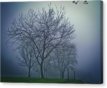Forest Mist Canvas Print by Jason Naudi Photography
