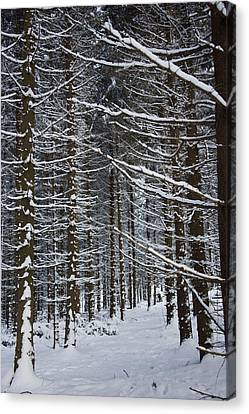 Forest Of Marburg In Winter Canvas Print by Axiom Photographic