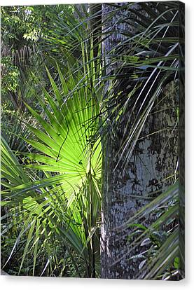 Forest Palm Canvas Print by Lou Belcher