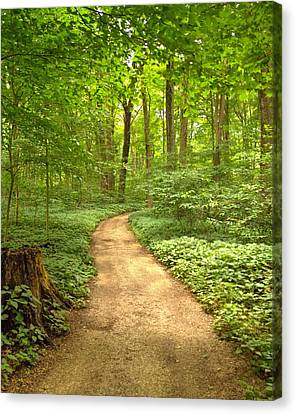 Canvas Print featuring the photograph Forest Path by Coby Cooper
