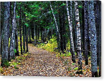 Forest Path In Autumn Canvas Print by Matthew Winn