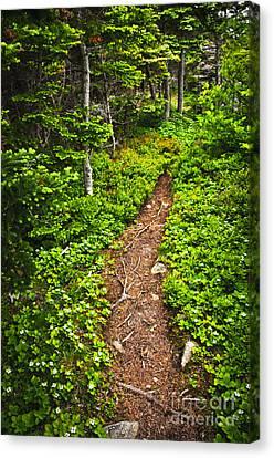 Newfoundland Canvas Print - Forest Path In Newfoundland by Elena Elisseeva