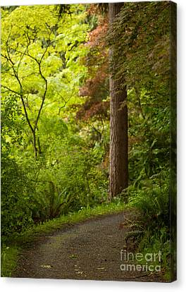Forest Path Canvas Print by Mike Reid