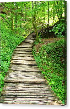 Canvas Print featuring the photograph Forest Path by Ramona Johnston