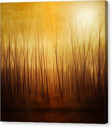Forest Canvas Print by Philippe Sainte-Laudy Photography