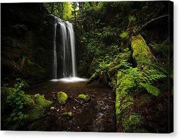 Tree Fern Canvas Print - Forest Pool by Mike Reid