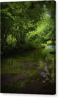 Forest River Canvas Print by Svetlana Sewell