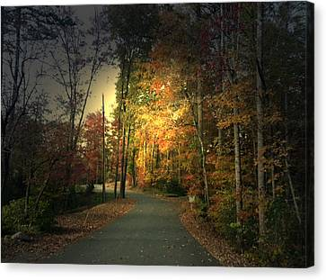 Canvas Print featuring the photograph Forest Road 2 by Elizabeth Coats