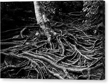 Root Detail Canvas Print