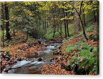 Forest Stream In Autumn Canvas Print by Stephen  Vecchiotti