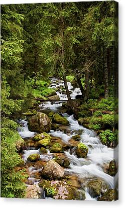 Forest Stream In Tatra Mountains Canvas Print by Artur Bogacki