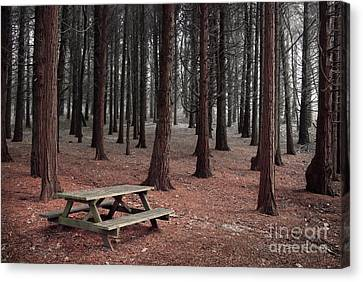 Forest Table Canvas Print by Carlos Caetano
