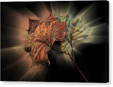 Forever Autumn Canvas Print by Debra and Dave Vanderlaan