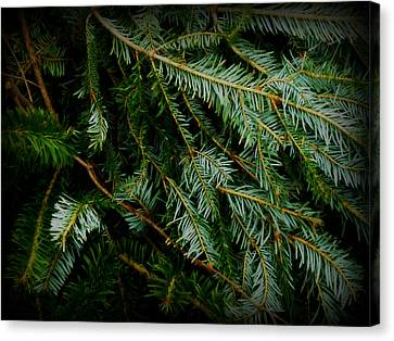 Canvas Print featuring the photograph Forever Green by Robin Dickinson