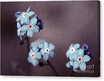 Forget Me Not 01 - S05dt01 Canvas Print by Variance Collections