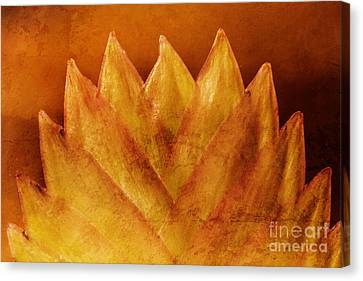 Forms Of Nature Canvas Print by Lutz Baar