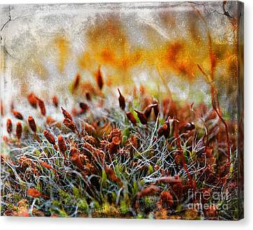 Forrest Of Moss Canvas Print by David  Hollingworth