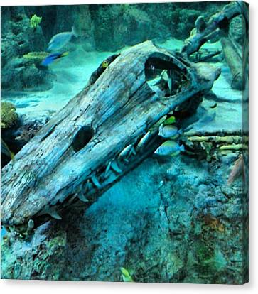 #fossil #hdr #hdr_lovers #creation Canvas Print by Kel Hill