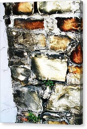Four Leaf Clover Canvas Print by Todd Sherlock