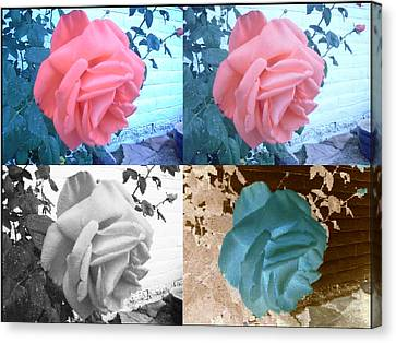 Four One Rose Canvas Print