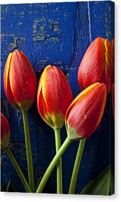 Four Orange Tulips Canvas Print by Garry Gay