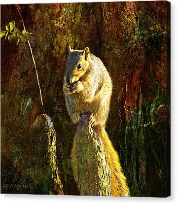 Fox Squirrel Sitting On Cypress Knee Canvas Print by J Larry Walker